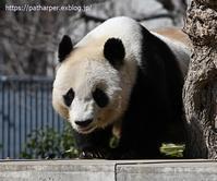2020年3月王子動物園その2 - ハープの徒然草
