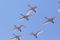 3日ブリのMF - 今日の鳥さんⅡ