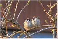 鳥さんいろいろ - ハチミツの海を渡る風の音