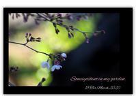 陽光桜 - 花ありて 日々