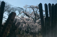 原木山妙行時 - IN MY LIFE Photograph