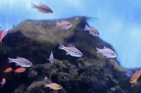 板橋区立熱帯環境植物館:東南アジアの海~海を彩る魚たち - 続々・動物園ありマス。