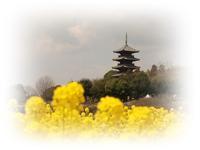 菜の花と五重塔 - ひとりあそび