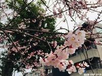小さな幸せ - 金沢市 床屋/理容室「ヘアーカット ノハラ ブログ」 〜メンズカットはオシャレな当店で〜