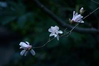 庭園の春 - 花の仕事と。。日々の暮らし。。
