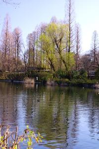 春の花を探しに★井の頭公園 - さんじゃらっと☆blog2