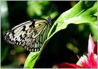 オオゴマダラ温室は快適 - 野鳥の素顔 <野鳥と日々の出来事>