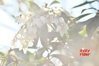 白は百難をかくす - ジージーライダーの自然彩彩