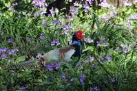 春分の日風が強い中での探鳥 - 私の鳥撮り散歩
