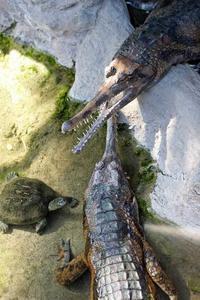 上野動物園:両生爬虫類館だより~ワニとカメ(April 2019) - 続々・動物園ありマス。