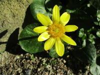 黄色の花 - 季節の写真