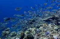 20・3・20春分の日 - 沖縄本島 島んちゅガイドの『ダイビング日誌』