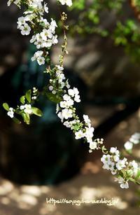 芽吹き 2 - 花と風の薫り