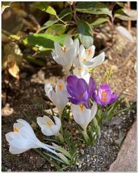 あたたかな春の日をうけて...... - 小さな庭 2