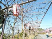 タンタワンお花見ランチ♪ - 尾道アジアンゲストハウス ビュウホテルセイザン&タイ国料理タンタワン