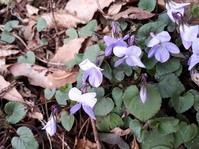 文珠山🌸花便り - 日々の宝物