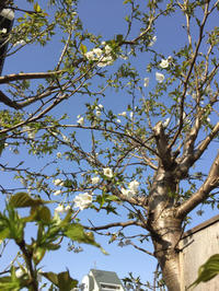 庭の花が - ハタ坊(釣り・鳥撮・散歩)