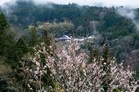雨に煙る桃源郷 - toshi の ならはまほろば