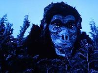 巨大猿 ゴロー~ウルトラQ怪獣第3号 - 特撮HERO倶楽部