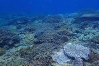 20.3.22良い天候に、連休終了! - 沖縄本島 島んちゅガイドの『ダイビング日誌』