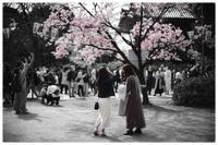 花見の風景 - コバチャンのBLOG