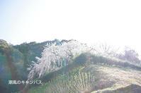 奥山田のしだれ桜 - 潮風のキャンバス