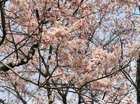花 - 花咲く俳句日誌