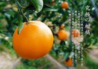 究極の柑橘「せとか」令和2年度も大好評でリピート購入続出!今期発送予定分はまもなくカウントダウン! - FLCパートナーズストア