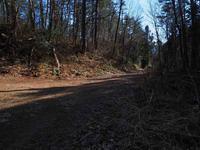 林道にも春が - 飛騨山脈の自然