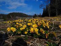 いよいよ春本番か - 飛騨山脈の自然