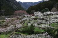 里山に春 - 薫の時の記憶