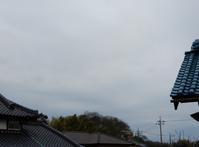 雪柳・雲南黄梅・芝桜・・・ - 庭を眺めて…コーヒータイム