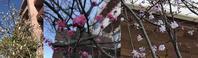 恵寿の3つの研修センター - 神野正博のよもやま話
