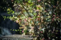 scene1662:春の花と心の春と3度目の春 - 自由時間ー至福のひとときー