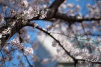 一足お先に / early Spring has come! - Seeking Light - 光を探して。。。