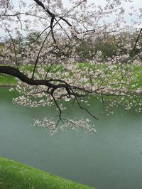 千鳥ヶ淵の桜を愛でてきました。 - ご無沙汰写真館