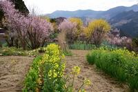 花の里の春西吉野 - 峰さんの山あるき