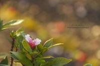 落ち桜。。。 - It's only photo 2
