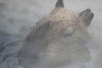 湯けむりの中で - 動物園放浪記