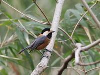ヤマガラが元気でした - コーヒー党の野鳥と自然パート3