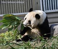 2020年3月王子動物園2その2 - ハープの徒然草