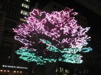 Neon-Zakura - Hommage an die japanische Ästhetik im Alltag und einfach umsonst...