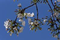 20年春の自然(20)…今日から春休み - ふぉっしるもしてみむとてするなり