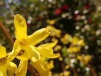 踊る黄色たち… - 侘助つれづれ