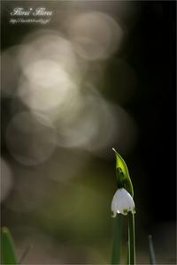 春風のささやき - Flores*Flores