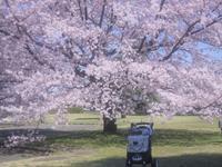 2020.3月稲荷山公園♪ - さくらひめほっこり日和