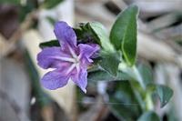 里地の花たち - 里山の四季