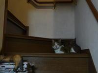 チコにお昼寝時流して良いと許可をもらった曲シリーズ #5 - COMPLEX CAT