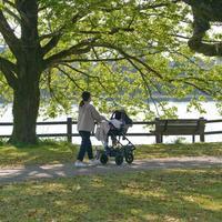 ✔ 江津湖は春色=熊本市 - チャレンジ! 日々の散歩道