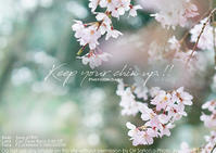 顔をあげて、しまっていこうぜ! sony α7R III + ZEISS Batis 2/40 CF実写#桜 - 東京女子フォトレッスンサロン『ラ・フォト自由が丘』〜恋フォトからはじめるさいとうおりのテーブルフォトと写真とカメラ〜